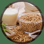 Réalisation d'usine agroalimentaire en Afrique : soja