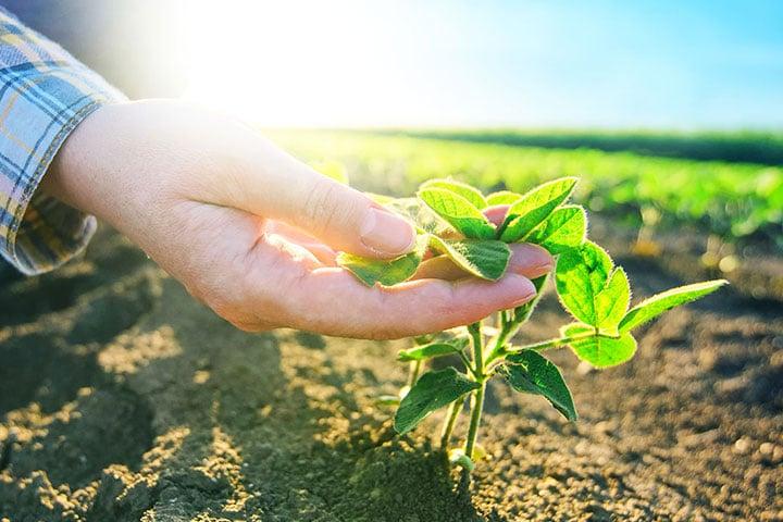 Etude sur le soja en Afrique