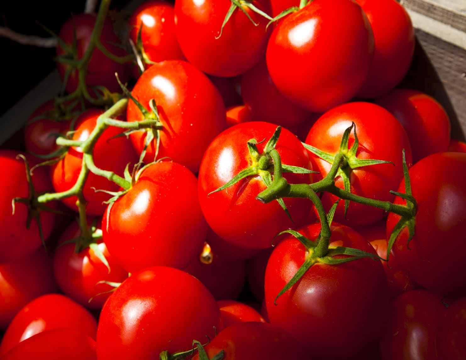 design plant processing tomato concentrate Africa